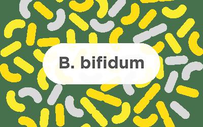 B. bifidum – A common probiotic strain