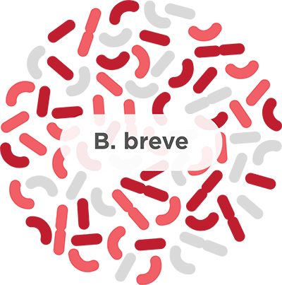 b. breve probiotic