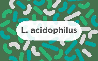 L. acidophilus – A common probiotic strain