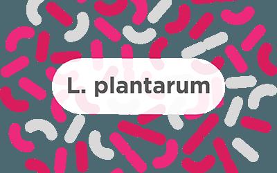 L. Plantarum – A common probiotic strain