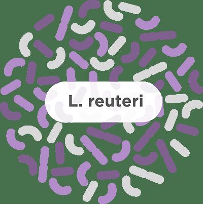 l. reuteri probiotic