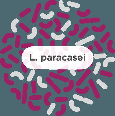 l paracasei probiotic strain