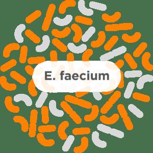 E. faecium - A common probiotic strain