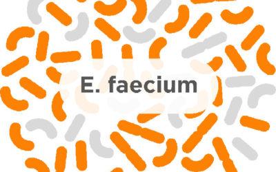 E. faecium – A common probiotic strain