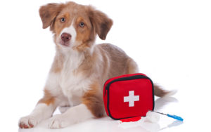 Pet First Aid | Humarian Health Blog