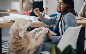 Best Practices for Taking Your Dog to Work | Humarian Health Blog | Probonix for Pets