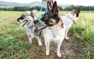 Holistic Pet Health Day by Elyse Horvath Founder, Natural Paws | Humarian Health Blog
