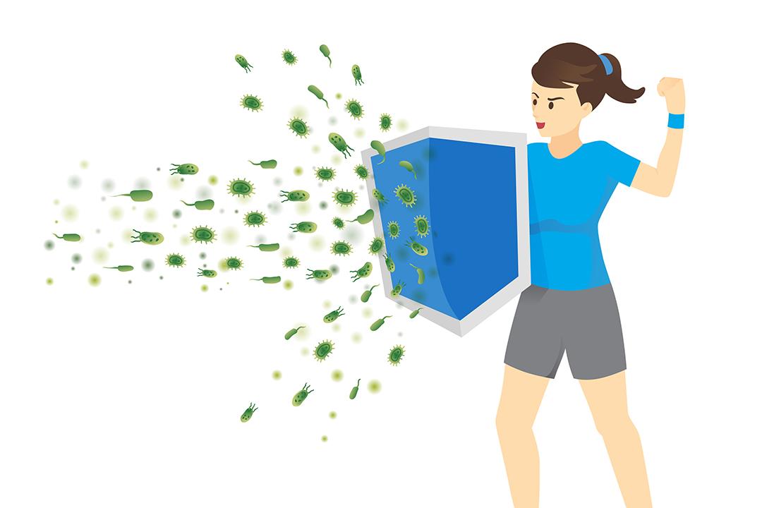 Probiotics and the Immune System - Humarian - Probiotics